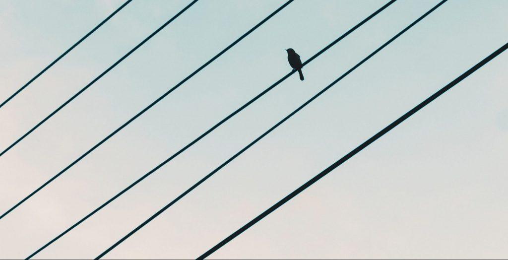 Lintu sähkölangalla